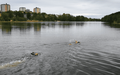 OPEN WATER SWIMMING TRAINING in Sickla